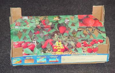 Caja de fresa de Clemente Viven