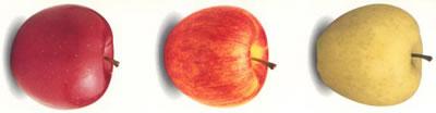 Distintas variedades de manzana