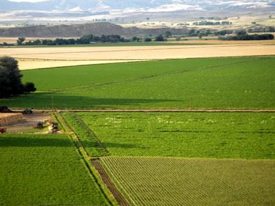 Campos de Alfalfa
