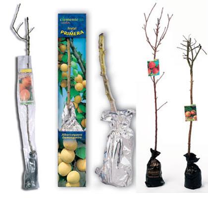 Formatos de frutales comercializados por Clemente Viven