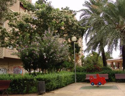Hibiscus syriacus en el parque
