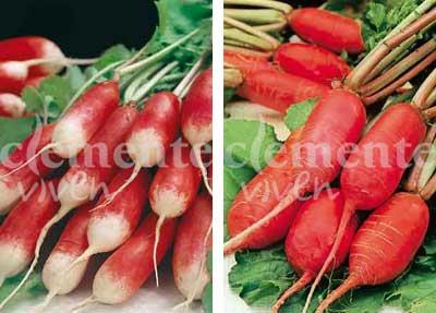 Medio largo rojo punta blanca y Datil rojo de Clemente Viven