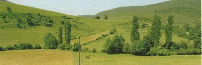 Pradera en Euskadi