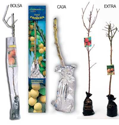 Presentación de frutales de Clemente Viven