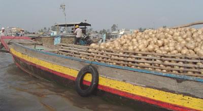 Transporte de cebollas en barco