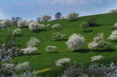 Valle de cerezos