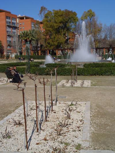 Rosales en Valencia