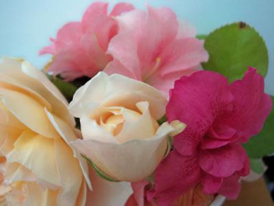 Rosas varias