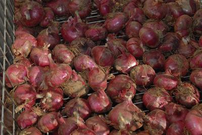 Selección de nuestra cebolla roja de Zalla